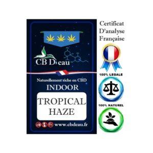 CBD Marketplace Fleurs CBD Tropical Haze