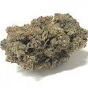 Fleur de Cannabis CBD Gelato | CBDOlogic | CBD Marketplace